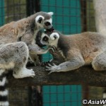 سفری ورد باغ وحش بانکوک