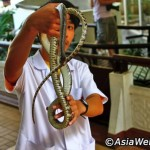 مزرعه مار بانکوک یکی از بزرگترین ها و جذاب ترین ها در نوع خودش در جهان است