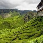 بلندی های کامرون یا کامرون هایلند (Cameron Highlands) يکي از پهناورترين موقعيت های تپه ای در مالزی است