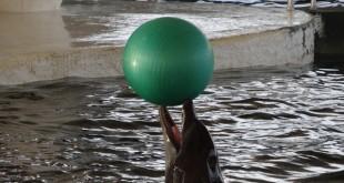مجموعه پارک دلفین های کیش ، مجموعه تفریحی شامل بخش های : پارک دلفین ها (نمایش دلفین ها یا دلفيناريوم) - پارک پرندگان - آکواریوم آب های شور - شو کلاسیک (سیرک گروه آکروبات ایران و روسیه) و پرشین شو می باشد