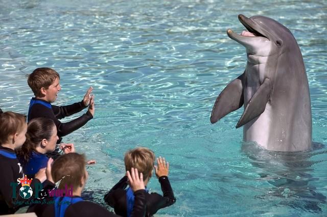 دوستداران حیوانات طوماری را علیه برنامه پارک دریایی (SeaWorld's) در پارک خاورمیانه امضا می کنند. بیش از 98،000 دوستداران حیوانات بیانیه ای علیه برنامه ای برای پارک سی ورلد (SeaWorld's) در دبی امضا کرده اند.